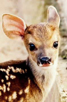 Sweet baby deer by -fifì on Flickr.