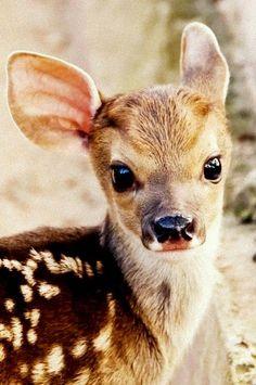 Sweet baby deer by -fifì on Flickr.