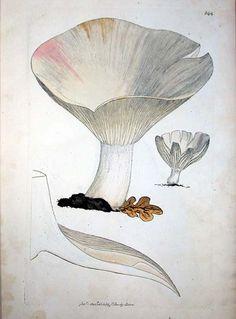 James Sowerby: Coloured figures of English fungi  http://eleanor.lib.gla.ac.uk/record=b1712085