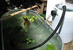 Utrzymywanie czystej wody w otwartym stawie rybnym lub w oczku wodnym może być trudne, ale nie musi być drogie. Ważny jest filtr, który można zbudować samemu. Przykład 10 domowych pomysłów na taki filtr. Funkcję wpomagającą pełni lampa UV, dlatego należy o niej również pamiętać. Gdzie kupić promienniki UV-C do takich lamp? Na pewno w sklepie AQUA-LIGHT.pl lub na www.uv-c.pl znajdziecie szeroki wybór dopasowany do Waszych potrzeb.