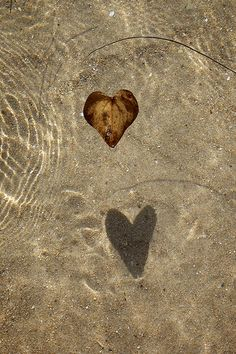 Heart leaf shadow
