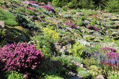 Ogród skalny. Rock garden