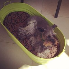 Cama para perro de forma reciclada en una tina metálica por Alexia De Alba Turcato