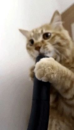 33 Animal GIFs That Are Guaranteed To Make You Laugh