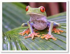 Costa Rica rondreis met kinderen - Rondje Costa Rica -