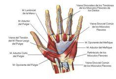Facial Muscles Anatomy, Muscle Anatomy, Anatomy Art, Human Anatomy, Tendinitis, Hand Injuries, Anatomy Reference, Art Reference, Knowledge