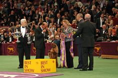 Westminster Dog Show Westminster Dog Show, Stay The Night, Auction Ideas, Hotel Guest, Dogs, Madison Square, Round Trip, Guest Room, Party Ideas