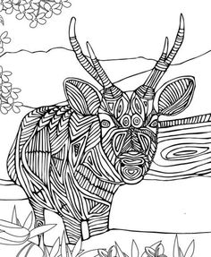 1086 Best Adult Colouring~Animals~Zentangles images