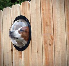 The Pet Peek Dome Window looks allows your dog to explore his/her curiosity, seeing exactly what's on the other side of that fence without having to dig out. Sample but interesting design!