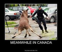 Meanwhile In Poland That Will Make You Laugh Like Crazy Extreme Dangerous And Scariest Rope Walk In The AirKirby Jenner Hilarious Photoshops With Kendall Meanwhile In Poland That Will Ma Cops Humor, Police Humor, Funny Police, Police Cars, Police Officer, Meanwhile In Canada, Funny Jokes, Hilarious, Funny Fails
