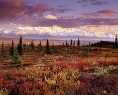 Sunset, Fall Tundra, Denali National Park - Jon Paul - Marcus ...