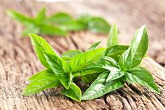 10 Healing Herbs You Can Grow At Home