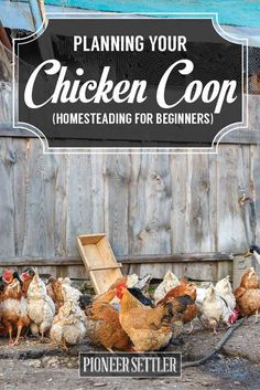 planning your chicken coop homesteading for beginners guide