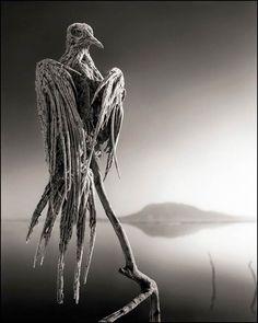 Le photographe Nick Brandt a immortalisé un étrange et incroyable phénomène sur les rives du lac Natron, en Tanzanie. Les eaux de ce lac sont fortement chargées en sel et en bicarbonate de soude, rendant la vie impossible à de nombreuses espèces. L'action combinée des composés chimiques de l'eau a littéralement séché, momifié sur place des animaux, laissant de véritables statues calcifiées, comme des momies naturelles parfaitement conservées.