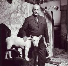 General Patton's bull terrier