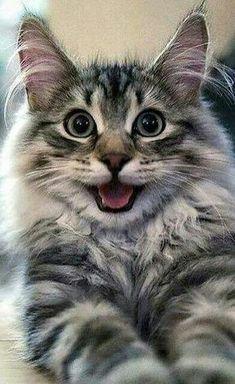 "chefepaulino: ""Minha Doce de paixão por cães e gatos "" and pets esl ppt clothes, pets and wild song for preschoolers, and pets evacuations near me, animals and pets qartulad natargmni multfilmebi princesebze. Cute Cats And Kittens, Baby Cats, Cool Cats, Kittens Cutest, Funny Kittens, Pretty Cats, Beautiful Cats, Animals Beautiful, Cute Funny Animals"