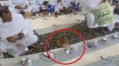 Cat waiting to break fasting with patient at Masjidil Haram