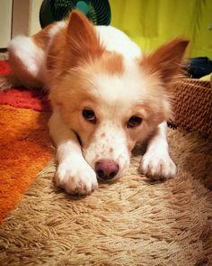 お散歩行かないのすか? タイフウってなんですか? #dog #inu #犬 #犬の麩 https://www.instagram.com/dog.fu/