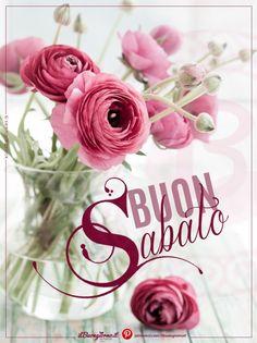 Ranuncoli rosa per augurare Buon Sabato