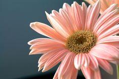 Fotos de flores - https://www.jardineriaon.com/fotos-de-flores.html #plantas