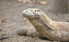 By jhs reptile Toronto Zoo, Zoos, Reptiles, Animals, Animais, Animales, Animaux, Animal, Dieren