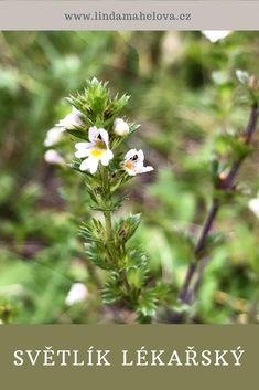 Herbalism, Dandelion, Herbs, Flowers, Plants, Herbal Medicine, Dandelions, Herb, Plant