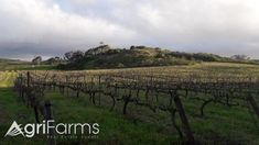 """6 hectares with vineyards, including an unspoiled """"koppie"""" with magnificent views. Make Your Own Wine, West Coast, Farms, Over The Years, Dreaming Of You, Vineyard, Cape, Lifestyle, Outdoor"""