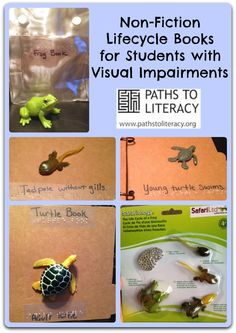 Create your own tactile books to illustrate basic science concepts, such as the life cycle of frogs and turtles.