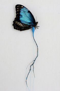 Domain butterfly illustration public