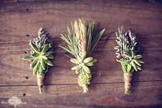 succulents bouts