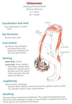Anatomy of Yoga Poses | Yoga Anatomy