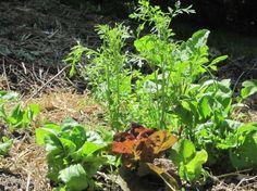 10 Tips for New Garden Farmers