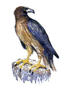 Bird of Prey Watercolor by Frits Ahlefeldt #illustration #bird #artwork #painting buzzard