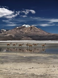 'Grassland' by Cristiano Venturelli on Location: Salar de Surire, Chile. Central America, South America, Mountain Music, Down The River, Trip Planning, Planning Board, Cristiano, Rafting, Outdoor Activities