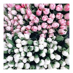 ! #easter #weekend #bellamummablooms #tulips