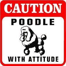 Quem tem a atitude de bulldog, não só define bem o seu objetivo, como o persegue até ao fim, e nada mais interessa até que seja realizado. No meu trabalho, observo pessoas com esta atitude, mas também com a atitude inversa – a atitude caniche, como gosto de lhe chamar: http://checkthisout.me/atitude-de-caniche +info: http://atrairclientes.com/