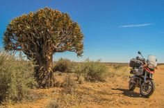 Bliss, Quiver tree close to the border of Namibia, South Afirca side - Travel the world on motorcycles