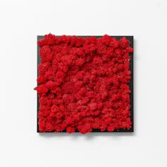 Color up your home indoor with a red decorative moss frame on the wall.