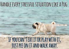 Great, hilarious advice!!