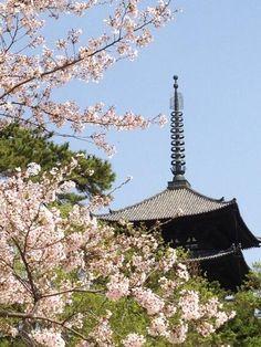 奈良 大和路の桜が満開