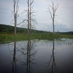 #WonderWatch 2015-83 Tree-o #TreesPlease #Peaceful #Nature #NaturePhotography #SandyLongPhotos #Beauty #Dusk #PoconoMtns #UpperDelawareRiverRegion #Zen