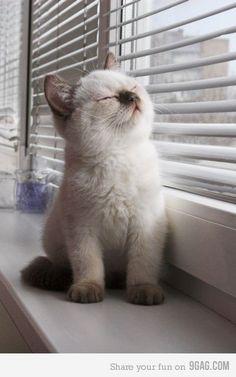 Kitten #kitten: Kitty Cats, Cute Animal, So Cute, Cute Kitten, Cute Cat, Kitty Kitty, Cat Lady, Kittycat