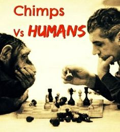 Check out what happened when the chimps and Humans challenged each other to a game | smart apes