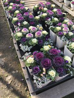 Cabbage Plant, Succulents, Floral Wreath, Gardens, Outdoors, Wreaths, Purple, Plants, Color