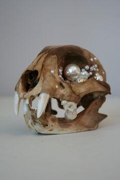 Meeeeyowwwwww  https://www.etsy.com/listing/229615219/bobcat-animal-skull-art