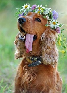 Even pups look lovely with flower crowns.