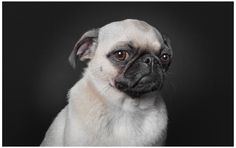 Professional photographerRalph Hargarten has recently launched aproject entitled'A Dog's life', within which he sheds a unique light onthe doggy subjects, revealing to us, dogsin a humanesqueway. He isbased in Hamburg, Germany and has had a…