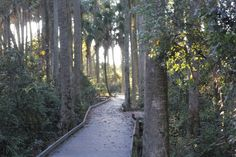 Outra parte da trilha, em plataforma de madeira