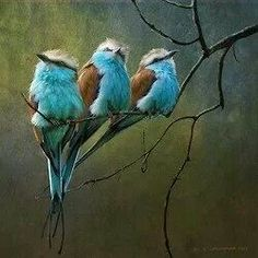 Beautiful blue colored  birds