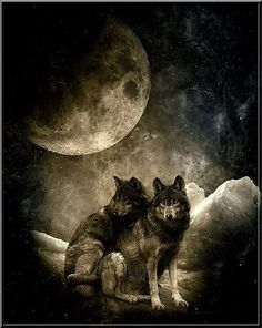Wolf Couple:
